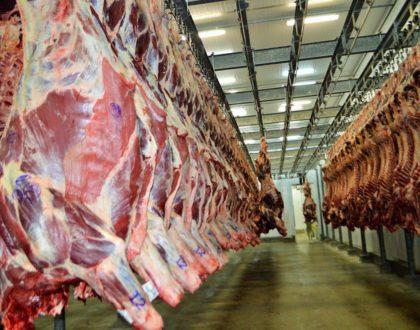 Carne bovina: quase 60% das exportações de julho foram para a China